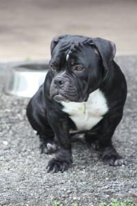 Our dog Darwin